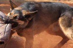 آخرین وضعیت دختربچهای که زیر دندانهای سگ ولگرد مجروح شد + عکس