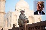 11414157 651 نگرانیها در مورد حمله میمونها به ترامپ در سفرش به هند