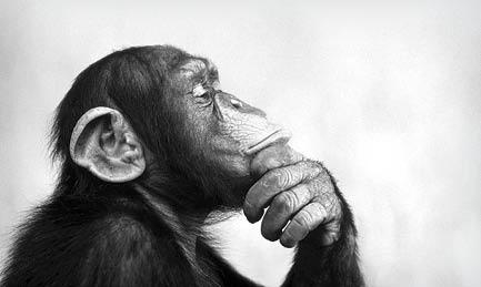 هوشمندی در قلمرو جانوران