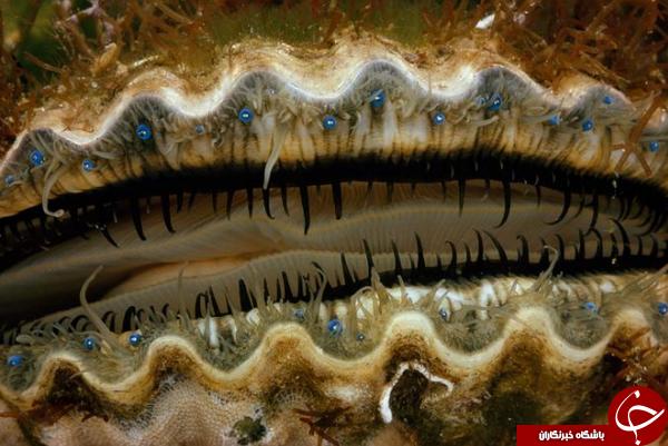 عکس روز نشنال جئوگرافیک از کلوزآپ چشم یک گوشماهی