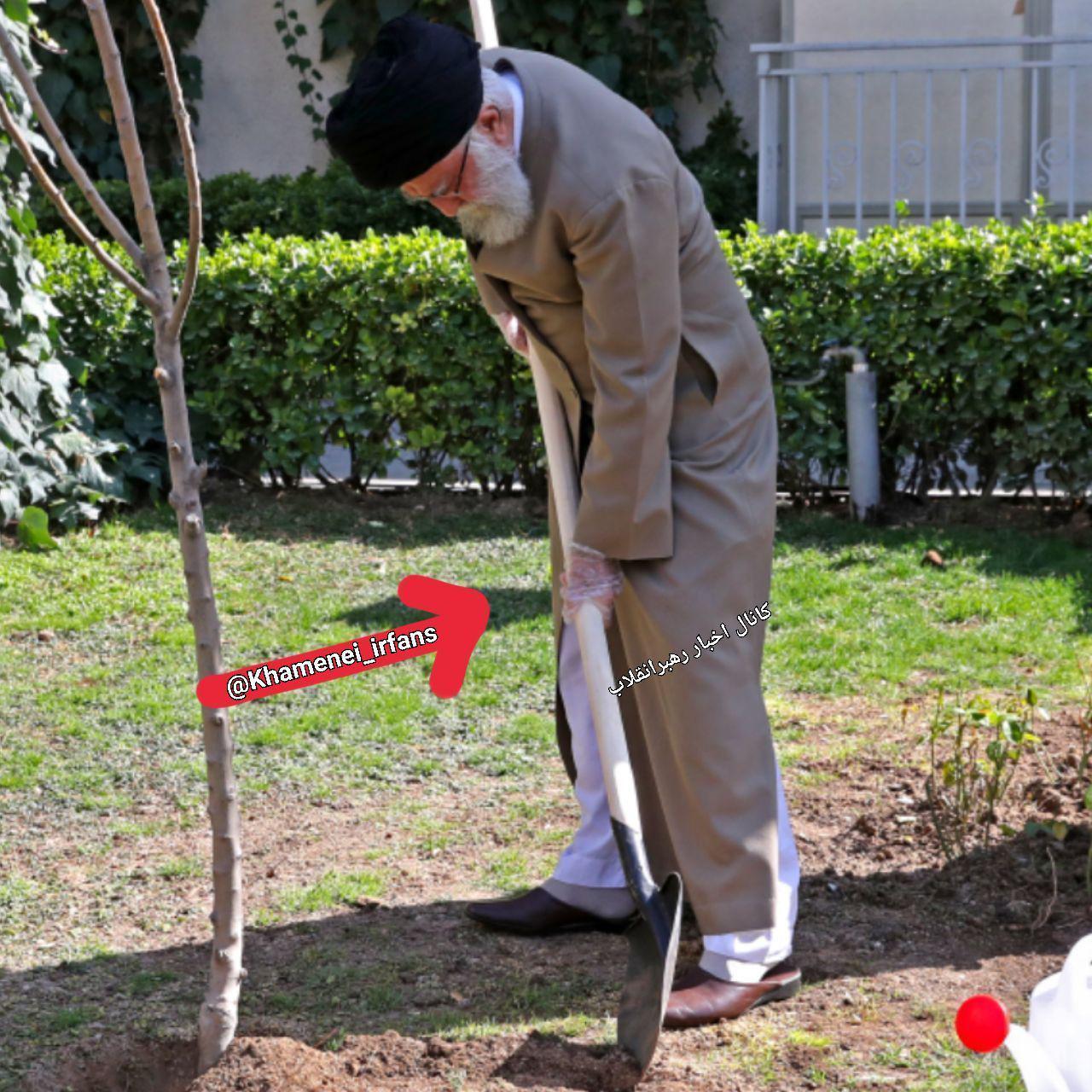 امروز؛ تصویری از رهبر انقلاب در حال درختکاری