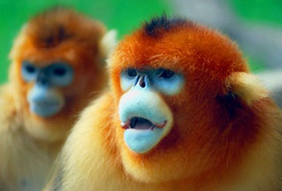 حیوانات عجیبی که انگار از جهان دیگری آمده اند!