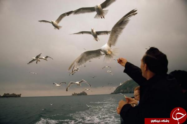 عکس روز نشنال جئوگرافیک؛ پرواز پرندگان دریایی بر روی عرشه کشتی
