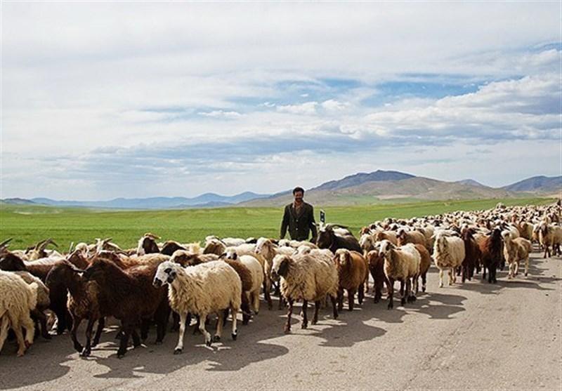 عشایر تا گذر از این شرایط به منظور کوچ بهاره عجله نکنند