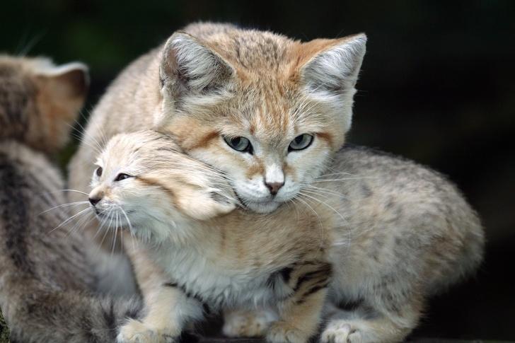 حیوانات به ظاهر بامزه ای که بسیار خطرناک هستند