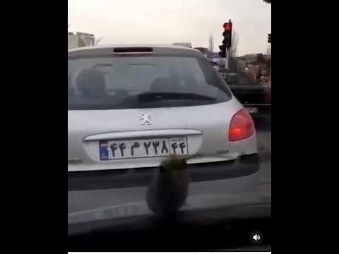 توضیحات استانداری تهران در مورد بارش بادمجان از آسمان پایتخت