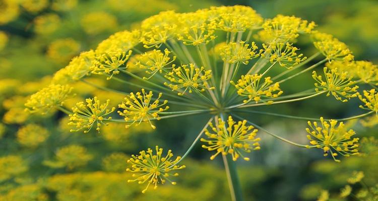 خواص گیاهان دارویی را بشناسید