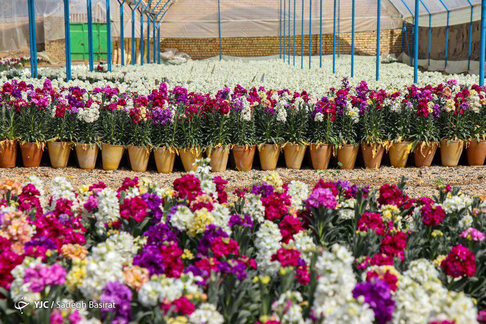 انواع گل را در ایام نوروز چند بخریم؟