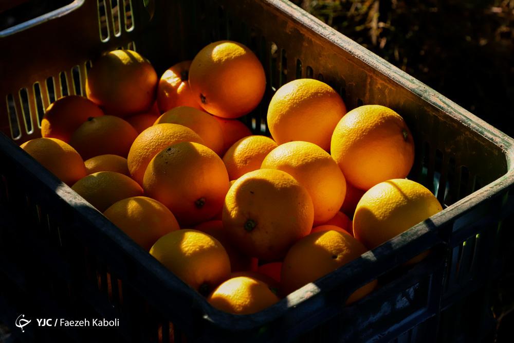 عرضه میوه شب عید در سراسر کشور/استقبال سرد مردم از بازار میوه