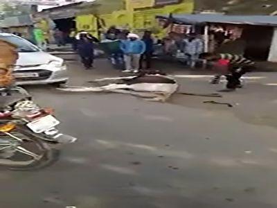 تلف شدن یک اسب پس از رم کردن در خیابان + فیلم
