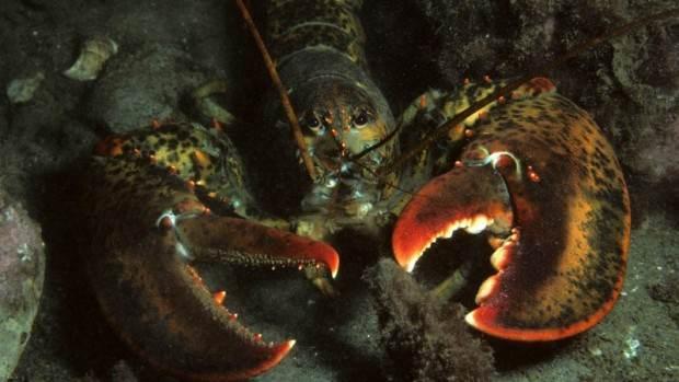 آشنایی با جاندارانی که هرگز نمیمیرند + تصاویر
