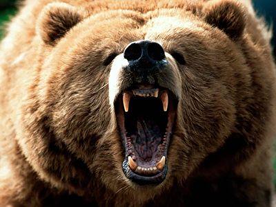 عید امیرحسینی16/ عاقبت نزدیک شدن به خرس گریزلی در جنگل + فیلم