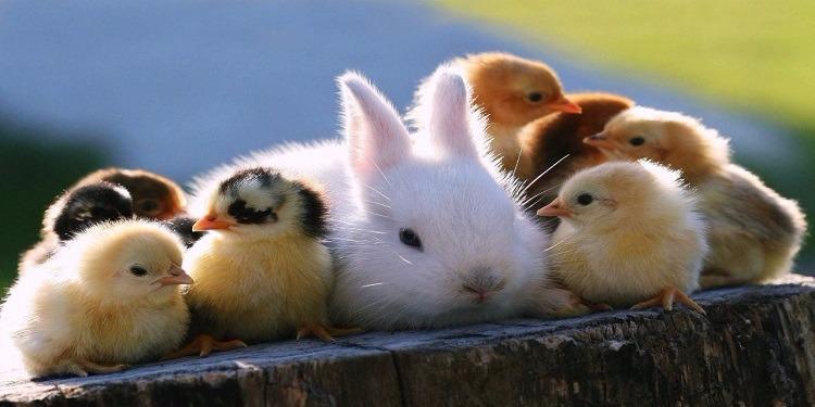 همه آنچه که باید در مورد کرونا و حیوانات خانگی باید بدانیم