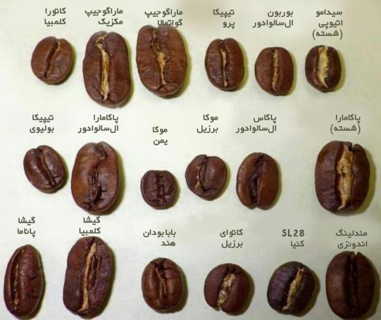 آموزش دم کردن کردن قهوه