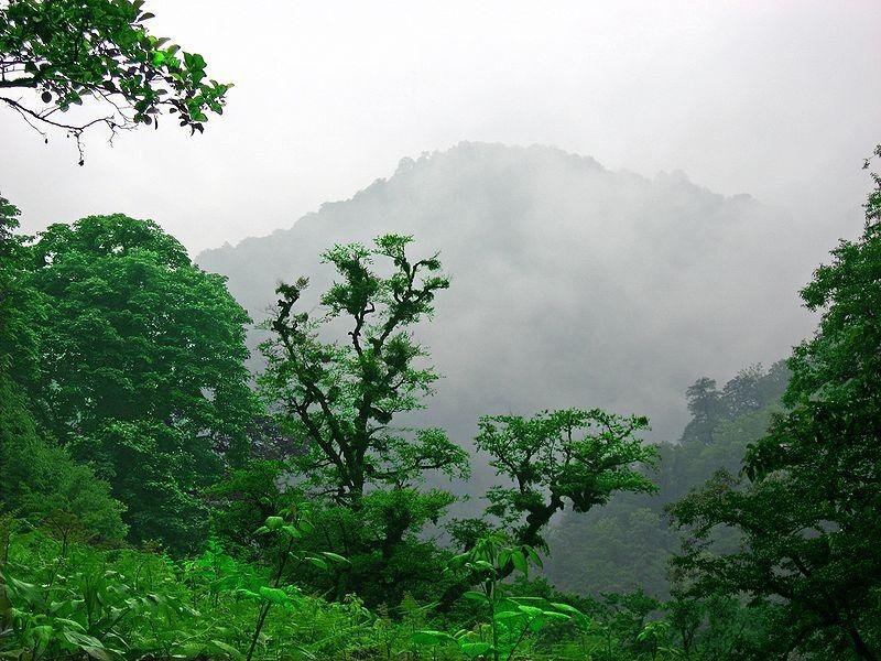 میزان نابودی جنگل ها در جهان در سال جاری چقدر بوده است؟