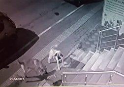 باشگاه خبرنگاران - حملهی یک گربه به ۵ سگ غول پیکر! + فیلم