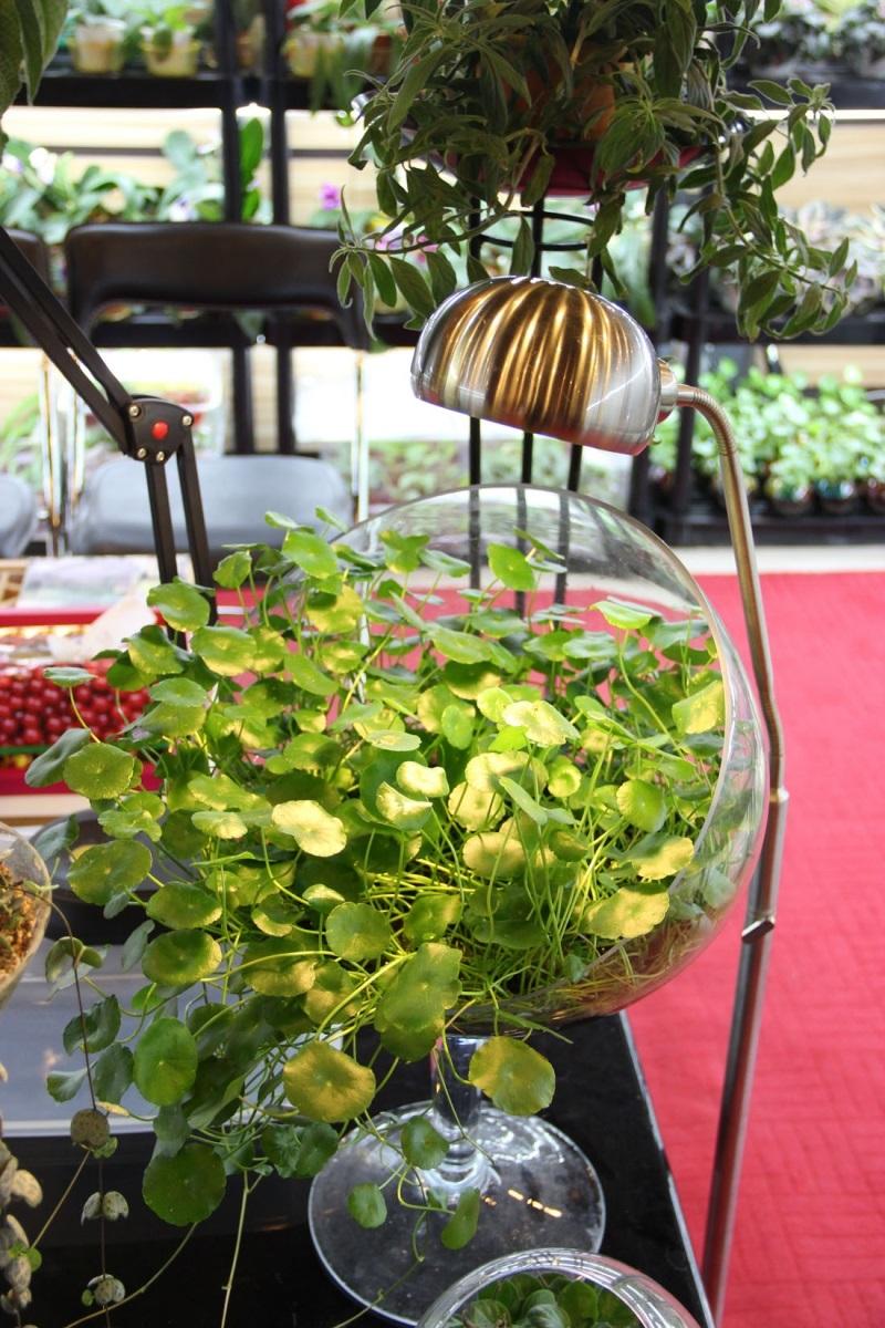 آغاز به کار هفدهمین نمایشگاه بینالمللی گل و گیاه در تهران