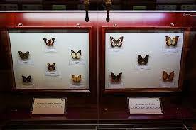 غنیترین موزه حشرهشناسی ایران کجاست؟ + تصاویر