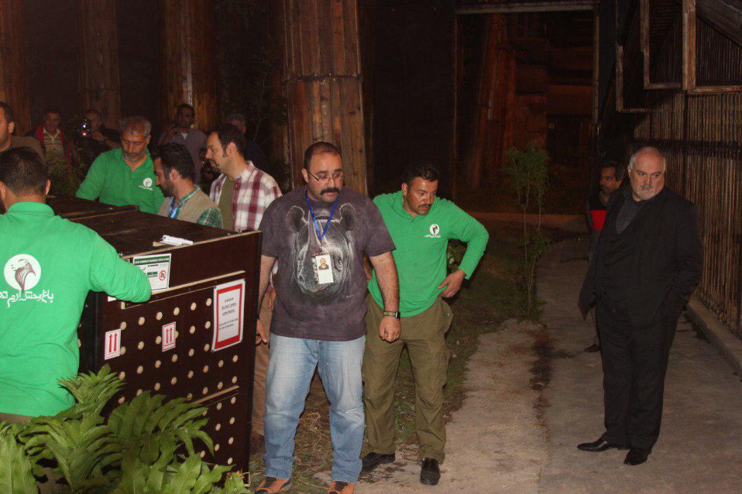 شیر نر ایرانی شب گذشته قدم به خاک زادگاهش گذاشت+ تصاویر