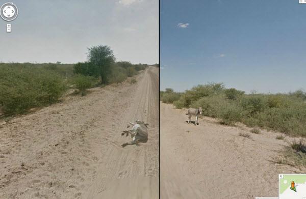 تصاویر عجیب تهیه شده توسط سرویس گوگل استریت که شاید ندیده اید
