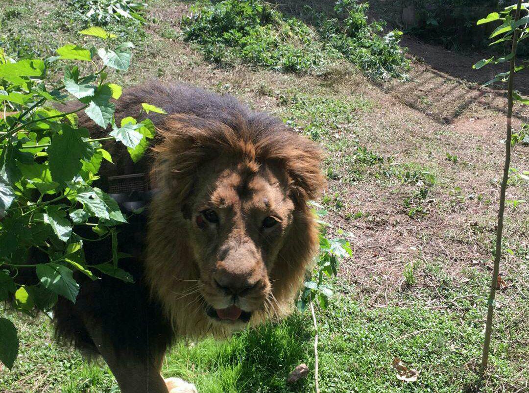 انتقال گونههای در حال انقراض باید با تایید اتحادیه باغ وحشهای اروپا باشد
