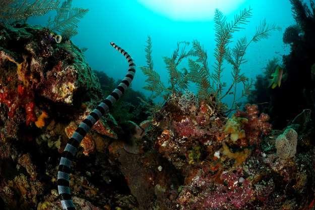 ۱۵ موجود زنده که جزو سمیترین جانوران کره زمین می باشد