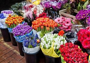 رکود حاکم در بازار گل/ گل رز بین ۸ تا ۱۰ هزار تومان است