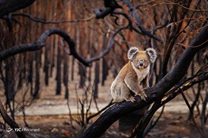 برگزیدگان مسابقات جهانی عکاسی طبیعت