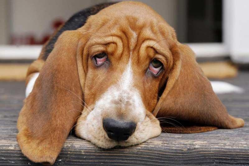 بیماریهایی که میتوانند از حیوانات خانگی به شما انتقال یابند
