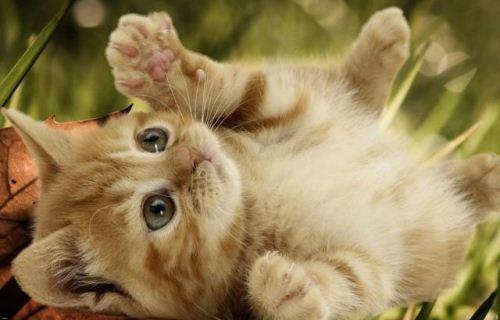 کدام جانوران دارای قویترین حس بینایی هستند؟