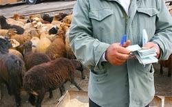 قاچاق دام علت گرانی گوشت است/بندرعباس گلوگاه قاچاق دام