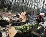 باشگاه خبرنگاران -شناسایی عاملان قطع درختان منطقه حفاظت شده گشت رودخان و سیاهمزگی