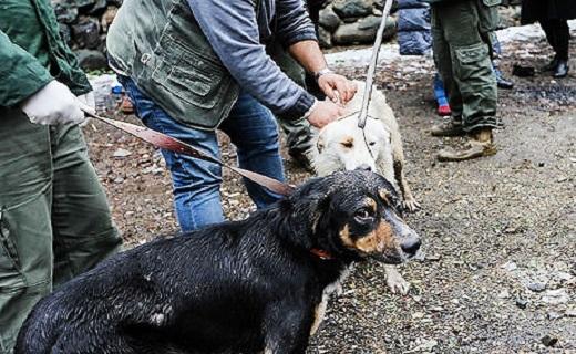 نگرانی مردم از جولان سگهای ولگرد در شهرها