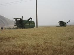 برداشت غلات از اراضی کشاورزی بدره آغاز شد