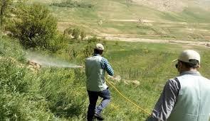 ورود ملخها به مزارع شهرستان بافت بدون خسارت