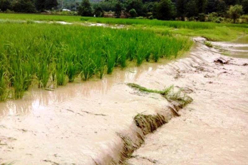 ۹۸ هزار هکتار اراضی کشاورزی زیر آب هستند