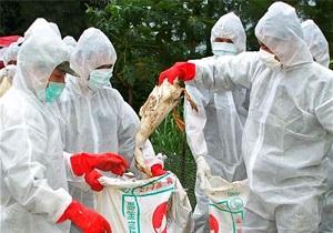 توصیههای بهداشتی برای جلوگیری از شیوع بیماری فوق حاد پرندگان دراستان