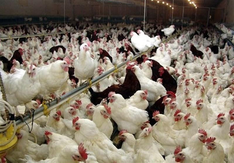 تایید شیوع آنفلوآنزای پرندگان در آذربایجان شرقی