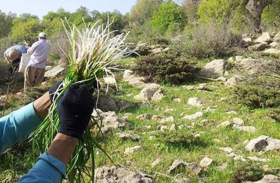 خودنمایی گیاهان خوراکی در فصل بهار