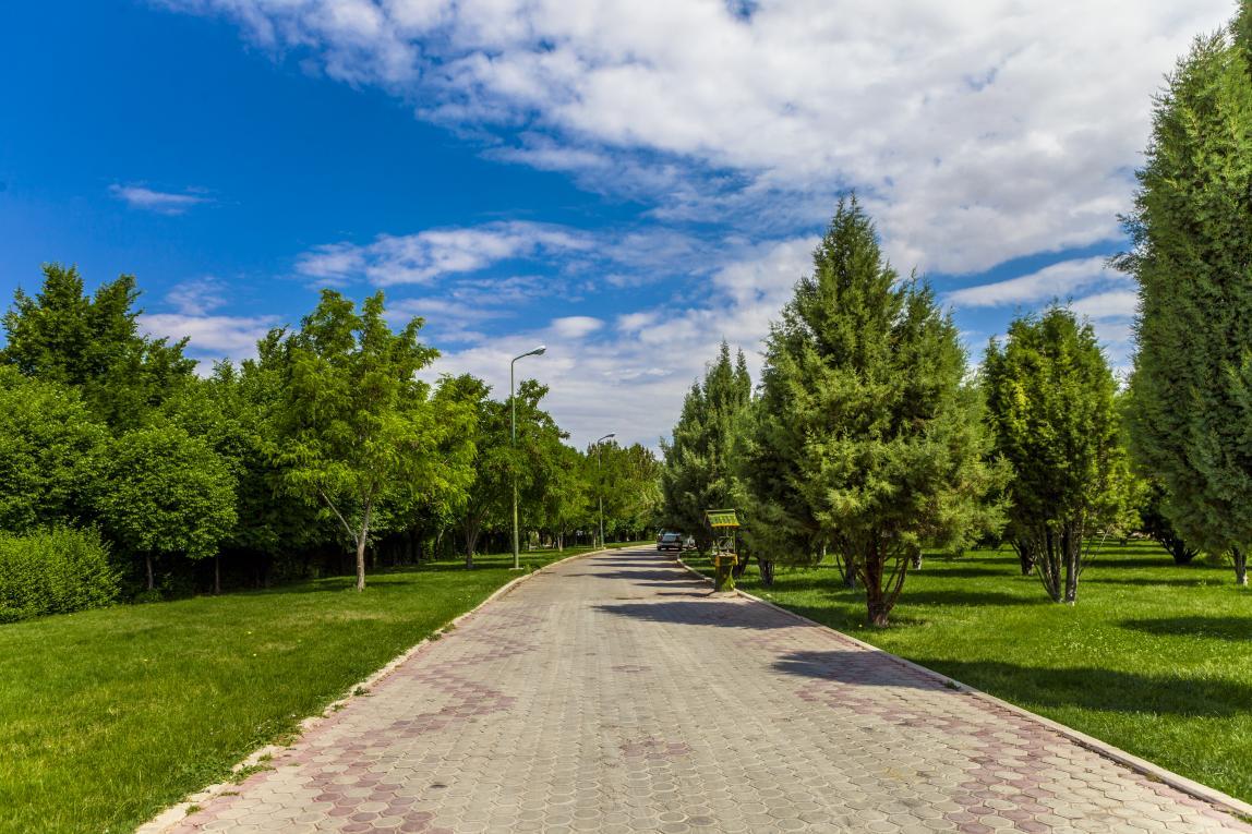 حفظ تمامی پوششهای گیاهی اعم از درخت درختچه و علف هرز در بوستان پردیسان