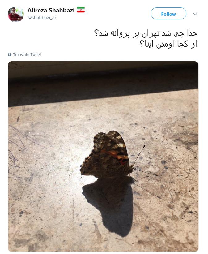 نکنه ملخها اومدن اینجا تبدیل به پروانه شدن؟!