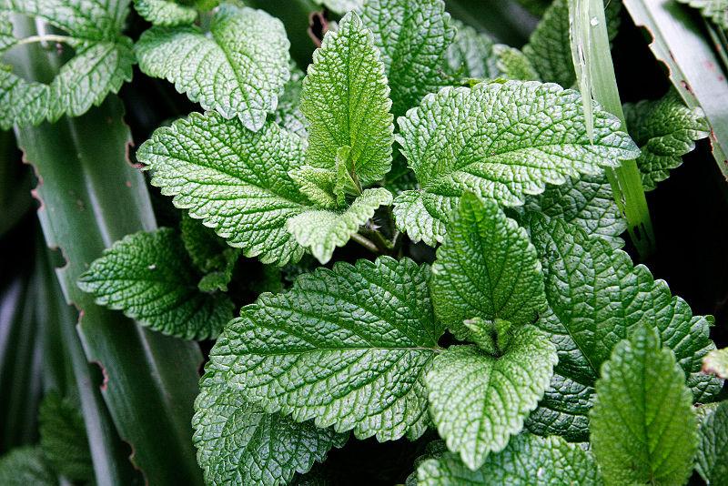 گیاه شگفتانگیزی برای روشن کردن پوست/ دارویی به نام ژله برای داتن پوستی صاف و شفاف/ صبحانهای با طعم کنترل قند برای دیابتیها