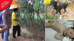 سگ قهرمان، جان نوزاد زنده به گور شده را نجات داد! +فیلم