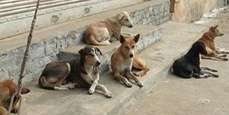 واکنش شهرداری تهران به قتل عام سگهای ولگرد در پایتخت