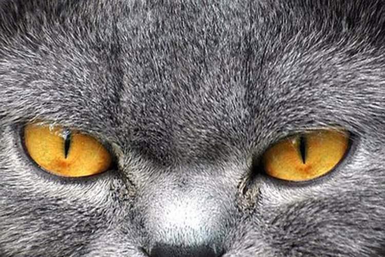 رمزگشایی از دلایل شکست پرژه  جنجالی سازمان سیا /  چرا پروژه «جاسوسی گربه ها» در آمریکا نیمه کاره رها شد؟