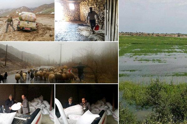 آخرین اقدامات سازمان دامپزشکی در مناطق سیل زده/ ۸ هزار و ۵۰۰ راس دام دفن بهداشتی شدند