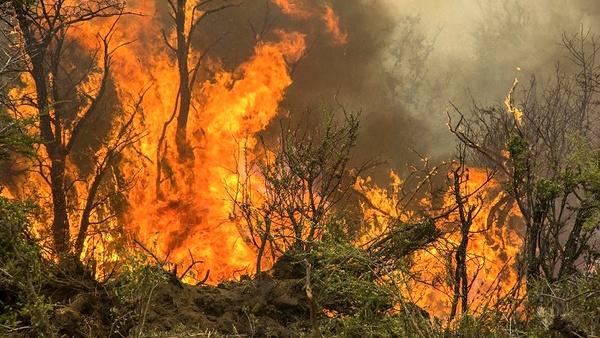 روزهایی پر از ترس در انتظار جنگلهای بلوط ایلام/ دامان طبیعیت را به راحتی آتش نزنیم