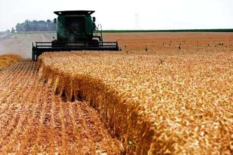 افزایش قیمت گندم، ماکارانی را گران کرد