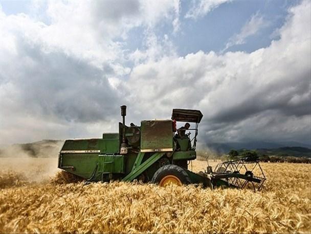 ۱.۷ میلیون تن گندم مازاد بر نیاز کشاورزان خریداری شد