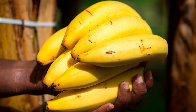 به چه دانههای خوراکی جهان  سلاطین خشکسالی می گویند